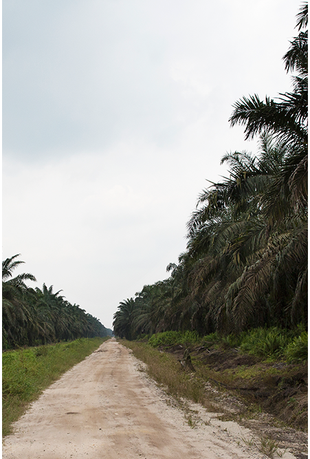 INDORIVER River of Manufacturers in Indonesia | Rolling Paper - Sustainable Oil Palm